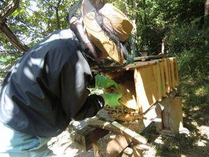 笠置山の自生バチのサムネイル画像